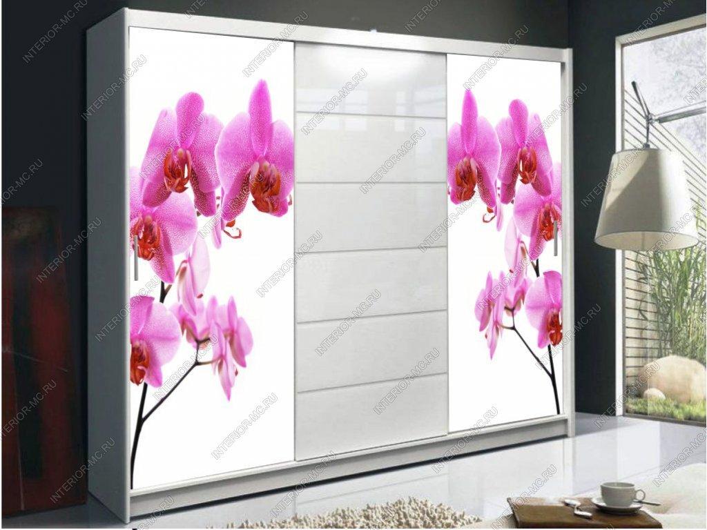 шкаф купе с фотопечатью цветы 0227 за 14100 руб